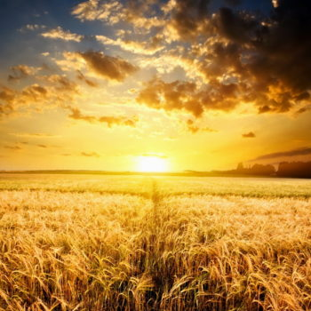 Divine Truth Hub - Fields of Gold